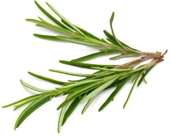 Love grows where my Rosemary goes